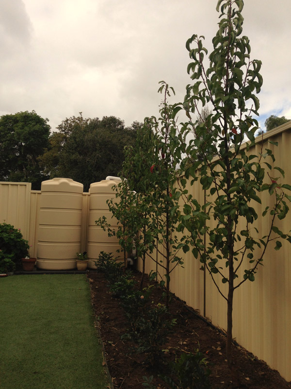 Plantings dirtwork landscapes pty ltd for Adelaide innovative landscaping